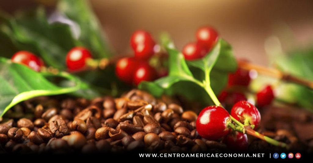 Café, Centroamérica, PROCAGICA, MESOCAFÉ,